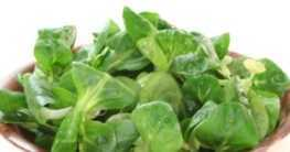 Anbau von Feldsalat
