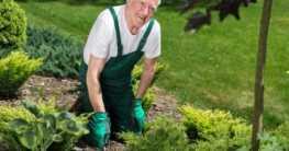 Einen eigenen Garten anlegen
