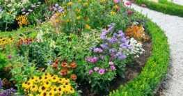 Gartenpflanzen Frühjahr