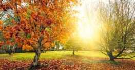 Gartenpflanzen Herbst