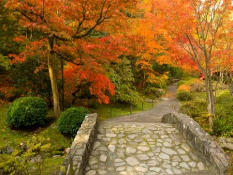 Gartentipps für den Herbst