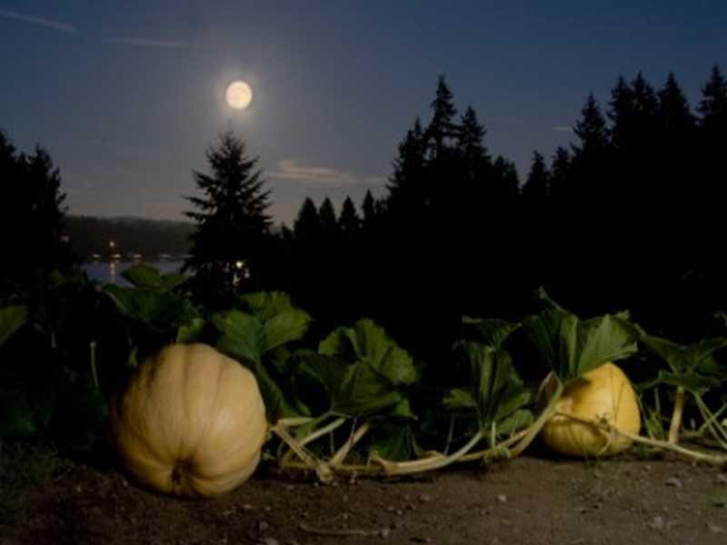 Garten Mond