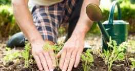 Gartenpflanzen im Wandel der Jahreszeiten