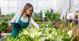 Gartenpflanzen - Einführung