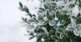 Gartenpflanzen Winter