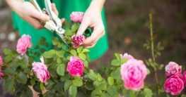 Gartenpflege während eines Gartenjahres