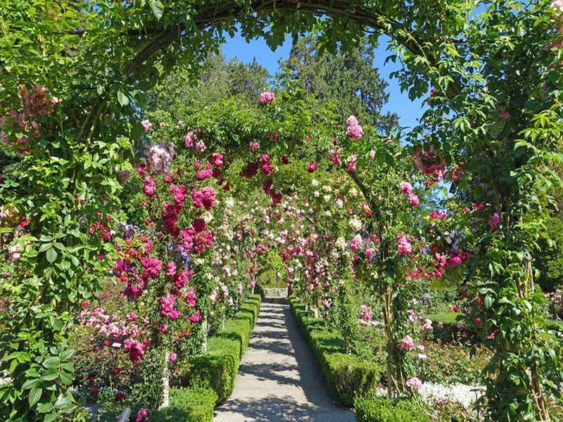 Gartentyp