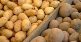Anbau von Kartoffeln
