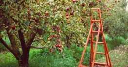 Einen Obstgarten anlegen