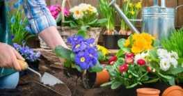 Allgemeine Pflege der Gartenpflanzen