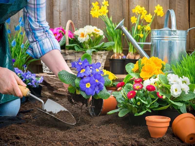 Pflege der Gartenpflanzen