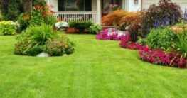 Rasen Ratgeber: Tipps für einen schönen Rasen