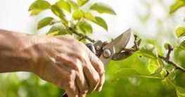Der Schnitt von Gartenpflanzen – Tipps und Tricks