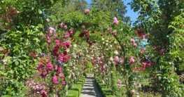 Vom Gartentraum zum Traumgarten