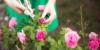 Die richtige Gartenpflege