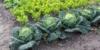 Gemüsegarten und Kräutergarten anlegen